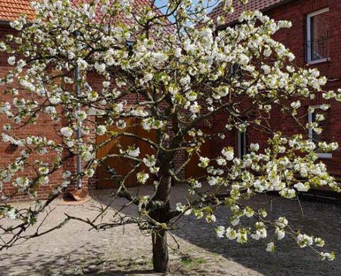Blühender Baum auf Spargelhof