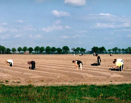 1996 wurde erstmals wieder richtig Spargel auf dem Hof angebaut. Aus vier wurden 90 Reihen Spargel von ca. 600 Metern Länge.